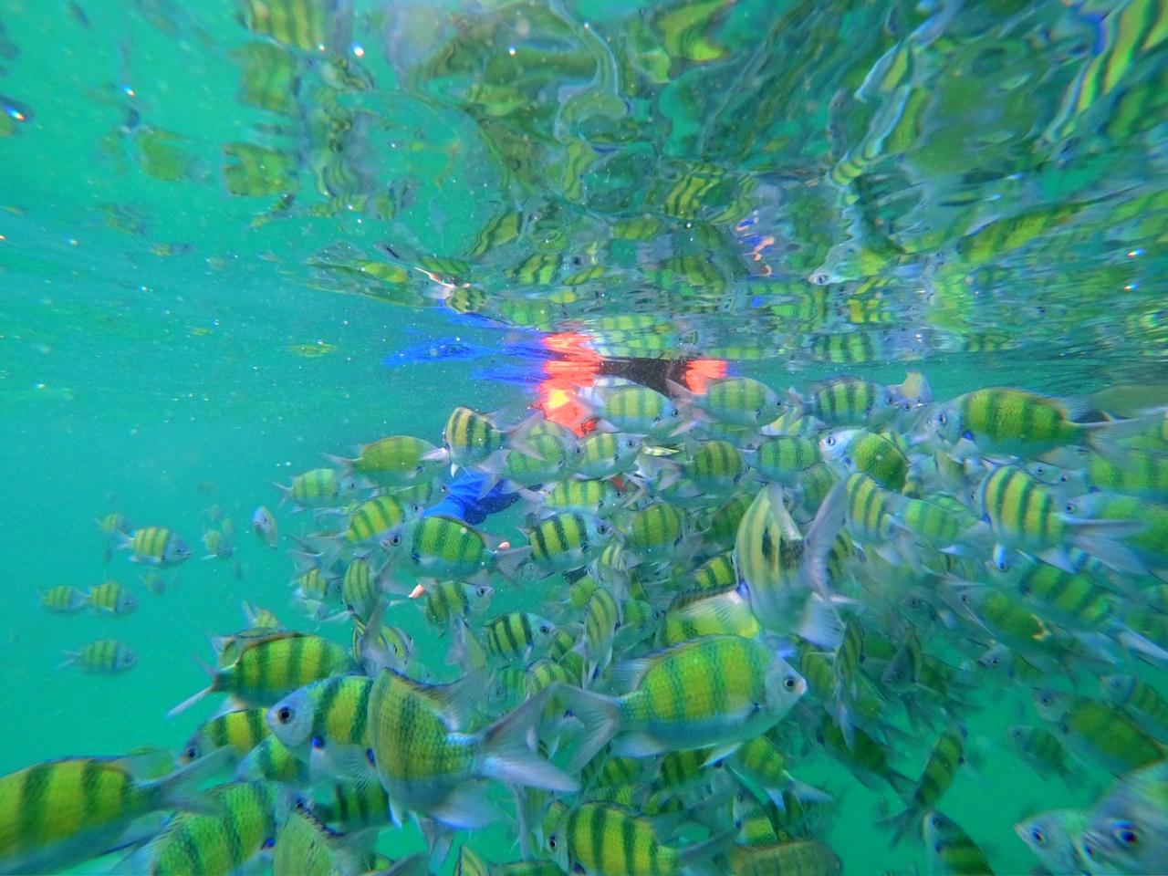 ทัวร์ 4 เกาะ ดำน้ำ